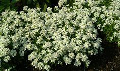 Bilde av SMÅDODRE Plants, Flowers, Planters, Herbs, Garden