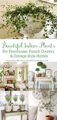 The best indoor plants for farmhouse, French country and cottage style homes Farmhouse house plants French Country House plants