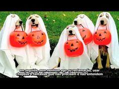 """God Made a Dog - Lendado PT-BR... """"Deus fez um cão"""". Ainda bem que o fez... ;-) Obrigada Deus pela """"Boneca"""" <3, pelo """"Cherrie"""" <3, pelo """"Bennie"""" <3, pela """"Nina"""" <3 que já morreram mas ainda tenho o """"Tobby"""" <3 :-)"""