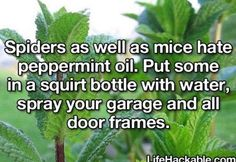 helpful hints life hacks, cleaning tips, home maintenance repairs machen . - helpful hints life hacks, cleaning tips, home maintenance repairs machen Helpful Hints to Ma - School Life Hacks, 1000 Life Hacks, Diy Cleaning Products, Cleaning Solutions, Cleaning Hacks, Pest Solutions, House Cleaning Tips, Natural Solutions, Simple Life Hacks