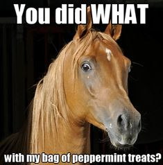 This horse is like my dog waiting for his treats after a long walk.
