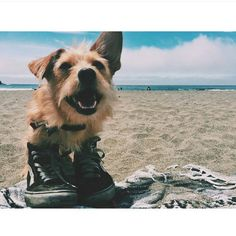 """""""When your dog wears your shoes better than you...#workit #vans #streetwear"""""""