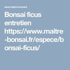 Entretien bonsai ficus Bonsai Ficus, Ficus Ginseng Bonsai