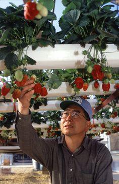 Hydroponics for Indoor Gardening