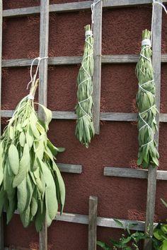 Hang smudge to dry DIY healing