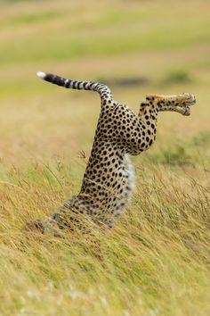 © Mohammed Alnaser / Comedy Wildlife Photography Awards