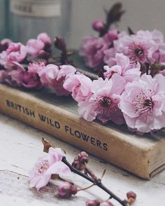 'Can words describe the fragrance of the very breath of Spring' N Blanchan Book Flowers, Shabby Flowers, All Flowers, Flowers Nature, Vintage Flowers, Beautiful Flowers, Pearl Wallpaper, British Wild Flowers, Book Photography