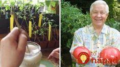 Bohatá úroda zaručená: Záhradkár radí jednoduchý trik, vďaka ktorému budú priesady silné a porastú ako z vody! Succulents, Pergola, Gardening, Sodas, Paradise, Red Peppers, Apple, Garten, Succulent Plants