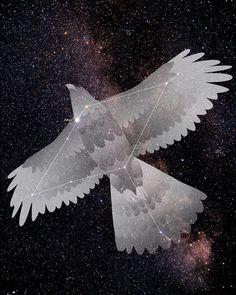 eagle constellation - Google Search