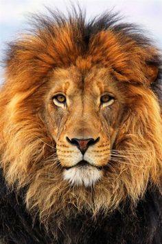 cara leon - Buscar con Google