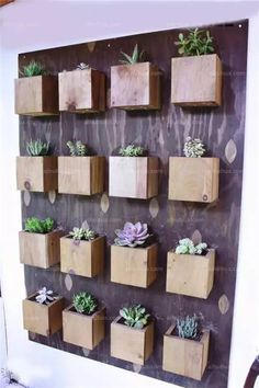 Succulents are low-maintenance and become perfect houseplants you can add a lot of style into your home using them. Check out these ideas!