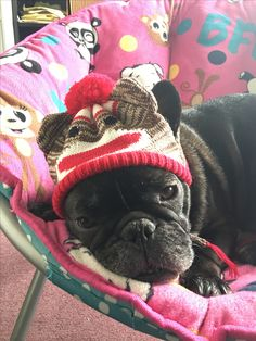 Lil Chewy with his sock monkey hat.