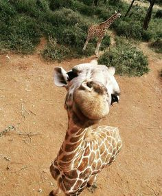 has anyone ever seen a giraffes head this close to them before?? This seems unreal!! Safari time in east africa