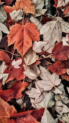 Autumn Leaves Wallpaper, Cute Fall Wallpaper, Flower Wallpaper, Nature Wallpaper, Iphone Wallpaper Herbst, Iphone Background Wallpaper, Aesthetic Iphone Wallpaper, Autumn Iphone Wallpaper, Fall Backgrounds Iphone