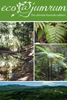 The strongest elements of eco@jumrum are the size of the blocks, the flora and fauna, the physical proximity and outlook of the land combined with strict environmental and building covenants and buyer incentives. http://bit.ly/ejr-estate http://www.ecojumrum.com.au/lp/