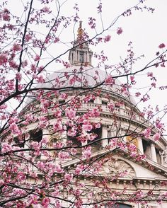 The blossoms of St. Paul's