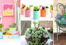 37 Most Beautiful Succulent Container Garden DIYs With Tutorials!