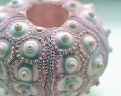 ❥ Sea urchin: aqua, pink, and white