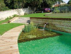 Filtración vegetal     El principio de una piscina biológica reside en su sistema de mantenimiento y de filtración que se efectúa por medio de plantas.