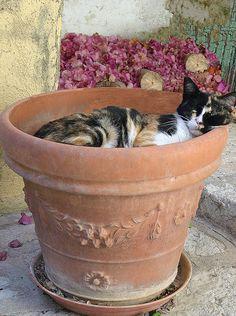 Symi cat nap