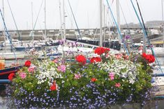 St. Peter Port, Guernsey: City of Flowers