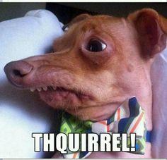 Thquirrel!