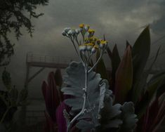 Botanical Inquiry by Daniel Shipp | Yellowtrace. ethereal