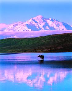 Alaskan Moose - Top Destinations