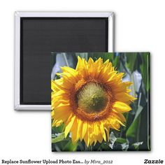 Replace Sunflower Upload Photo Easily Create Magnet #makeyourownmagnet #createmagnets #makefridgemagnet #custommagnets #sunflowersnaturemagnet #makephotomagnets Vacation Images, Create Photo, Round Magnets, Best Birthday Gifts, Daughter Of God, Photo Magnets, Nature Images, Paper Cover, Flowers Nature