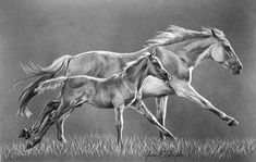 Western Pencil Art | Maria Angelo Fine Art...