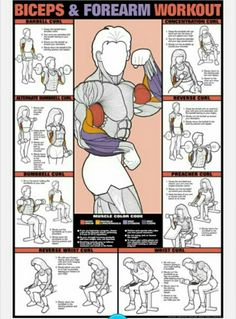 & Forearm Workout Fitness Chart (Co-Ed) Buy your Biceps & Forearm Workout Fitness Chart (Co-Ed) at !Buy your Biceps & Forearm Workout Fitness Chart (Co-Ed) at ! Fitness Workouts, At Home Workouts, Fitness Tips, Fitness Motivation, Group Workouts, Workout Routines, Workout Plans, Arm Workouts For Men, Workout Exercises