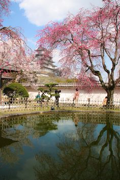 Himeji Castle: Spring in Japan by alaine on 500px