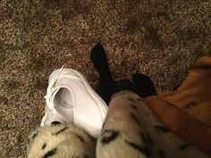 Walk In My Shoes, Cats, Animals, Gatos, Animales, Animaux, Animal, Cat, Animais