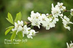 Digital print digital picture flower white by pixelphotogift