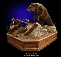 Grizzly Bear Mount by Northeast Taxidermy Studios. #taxidermy #mounts #hunting