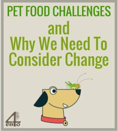 Pet food as it is currently produced is filled with problems. Not only are the ingredients questionable, but so are the methods. What are the alternatives? Food Challenge, Pet Food, We Need, Challenges, Change, Pets, Animals And Pets