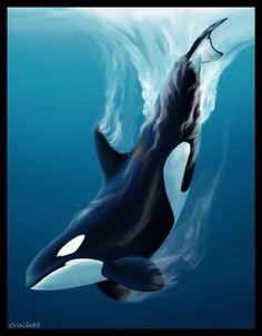 Orca Art                                                       …                                                                                                                                                                                 More
