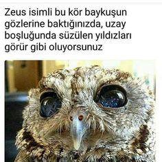 Bilgi Blind Owl, Animals Beautiful, Cute Animals, Crazy People, Pusheen, Percy Jackson, His Eyes, Cool Places To Visit, Karma