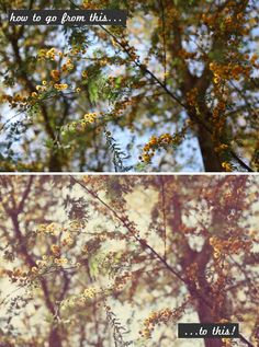 Vintage Filter Tutorial for Photoshop Elements - from Story of My Life Blog