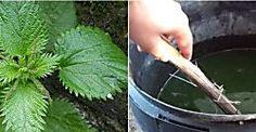 Cómo hacer purín de ortigas para el mejor cuidado de nuestras plantas