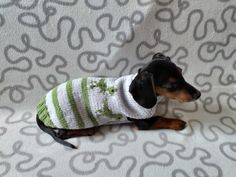 Dinosaur knitted sweater for dachshund or small dog, dinosaur dog sweater, dino sweater | dachshundknit Dachshund Clothes, Puppy Clothes, Yorkshire Terrier, Small Dogs, Chihuahua, Your Pet, Puppies, Pets, Pattern