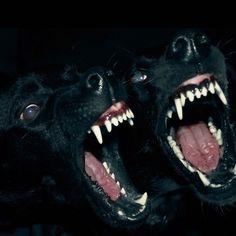 Ferte In Noctem Animam Meam: Photo The Wicked The Divine, Dog Teeth, Doberman Dogs, Airedale Terrier, Werewolf, Dark Art, Art Inspo, Art Reference, Mafia