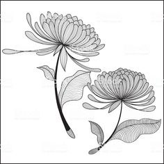 doodle Chrysanthemum-illustration royalty-free doodle chrysanthemumillustration stock vector art & more images of abstract Chrysanthemum Drawing, Flower Drawing Tutorials, Simple Line Drawings, Floral Drawing, Flower Doodles, Plant Illustration, Pen Art, Clipart, Doodle Art