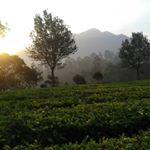 Jasa Sewa Villa Bunga Lembang (@sewavilabunga) • Foto dan video Instagram