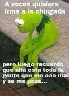 Rana René, meme, mexican humor, spanish, Kermet the frog.