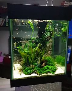 42 Astonishing Aquarium Design Ideas For Indoor Decorations - An aquarium is an enclosure with at least one clear side that houses water-dwelling fish, plants and other livestock and decorations. An aquarium offe. Aquarium Setup, Aquarium Design, Aquarium Nano, Tropical Fish Aquarium, Tropical Fish Tanks, Aquarium Fish Tank, Saltwater Aquarium, Fish Tank Decor, Klein Aquarium