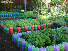 Risultati immagini per horta em garrafa pet Veg Garden, Vegetable Garden Design, Garden Beds, Garden Art, Edible Garden, Potager Palettes, Diy Plastic Bottle, Recycled Garden, Bottle Garden