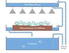 Die Grafik zeigt die Funktionsweise von Vitalion Line Chart, Bar Chart, Stress, Aquaponics, Design, Pisces, Bar Graphs, Psychological Stress