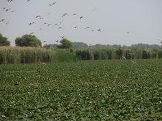 Tisza tó, olyan mint a Floridai Everglades, www.tavitura.hu