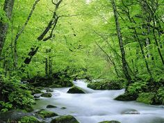 The Sign of summer - Summer nature photography - Fresh Summer wallpaper - clear stream & Green Trees22